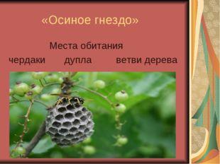 «Осиное гнездо» Места обитания чердаки дупла ветви дерева