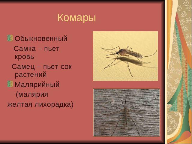 Комары Обыкновенный Самка – пьет кровь Самец – пьет сок растений Малярийный...