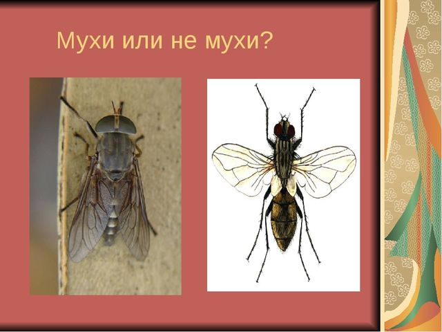 Мухи или не мухи?