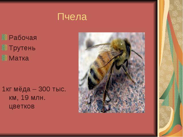Пчела Рабочая Трутень Матка 1кг мёда – 300 тыс. км, 19 млн. цветков