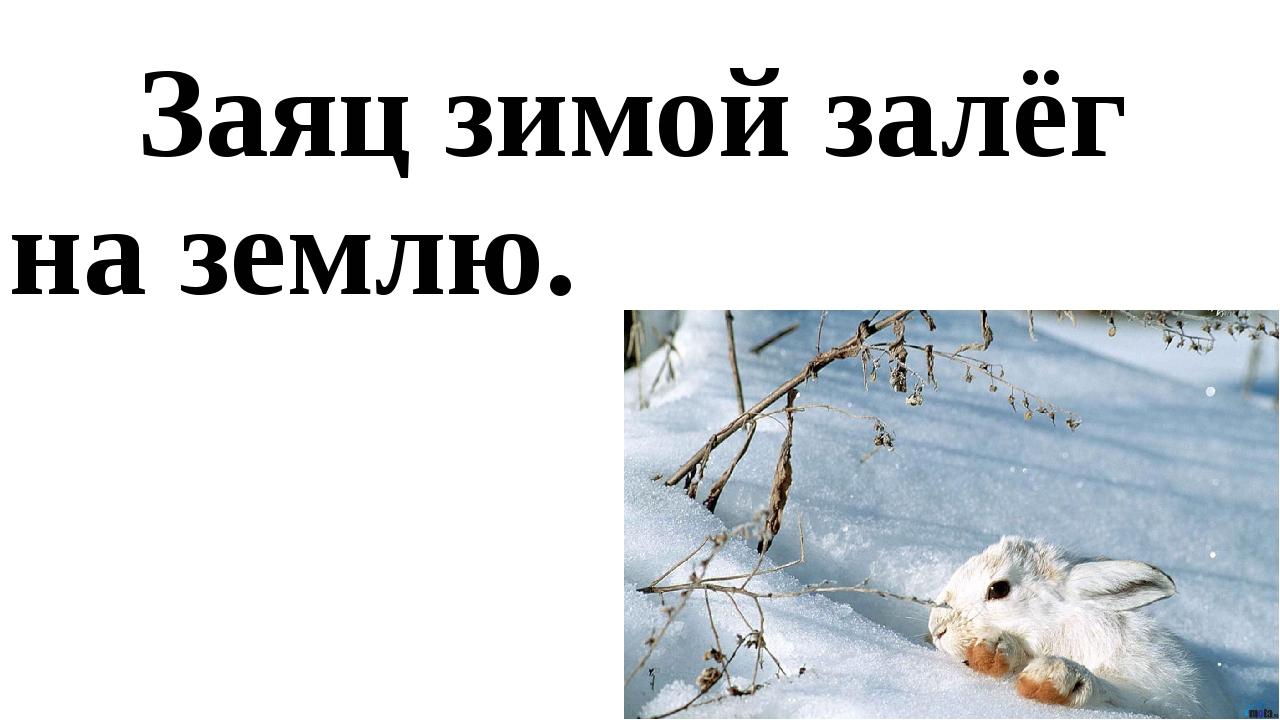 Заяц зимой залёг на землю.