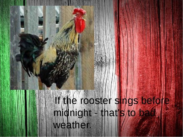 . If the rooster sings before midnight - that's to bad weather.