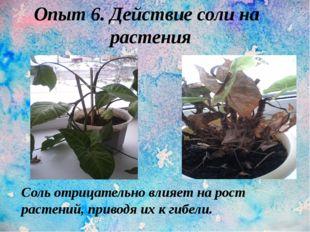 Опыт 6. Действие соли на растения. Соль отрицательно влияет на рост растений,