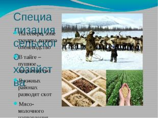 Специализация сельского хозяйства На севере, зоне тундры, развито оленеводств