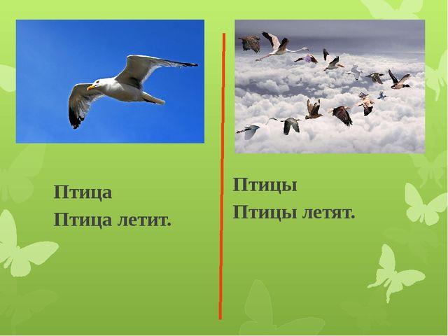 Птица Птица летит. Птицы Птицы летят.