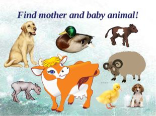 Find mother and baby animal!