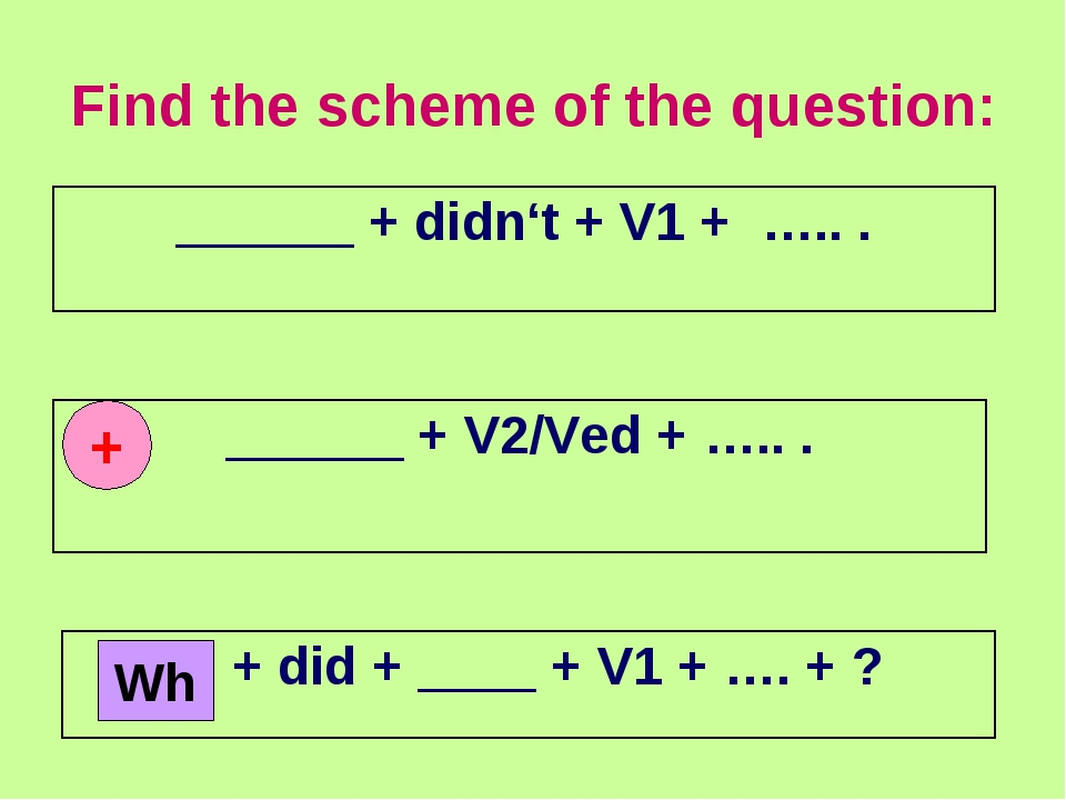 Find the scheme of the question: + Wh ______ + didn't + V1 + ….. . ______ + V...