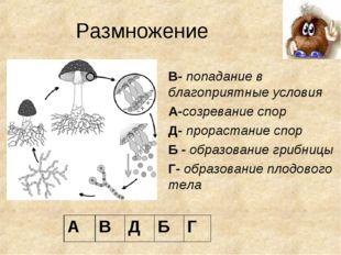 Размножение В- попадание в благоприятные условия А-созревание спор Д- прораст