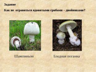 Задание Как не отравиться ядовитыми грибами – двойниками? Бледная поганка Шам