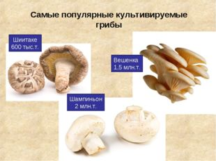 Самые популярные культивируемые грибы Вешенка 1,5 млн.т. Шампиньон 2 млн.т. Ш