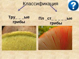 Классификация Тру_ _ _ые грибы Пл _ст_ _ _ _ _ые грибы
