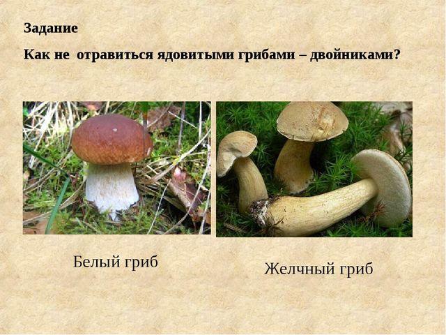 Задание Как не отравиться ядовитыми грибами – двойниками? Желчный гриб Белый...