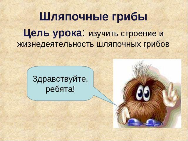 Шляпочные грибы Цель урока: изучить строение и жизнедеятельность шляпочных г...
