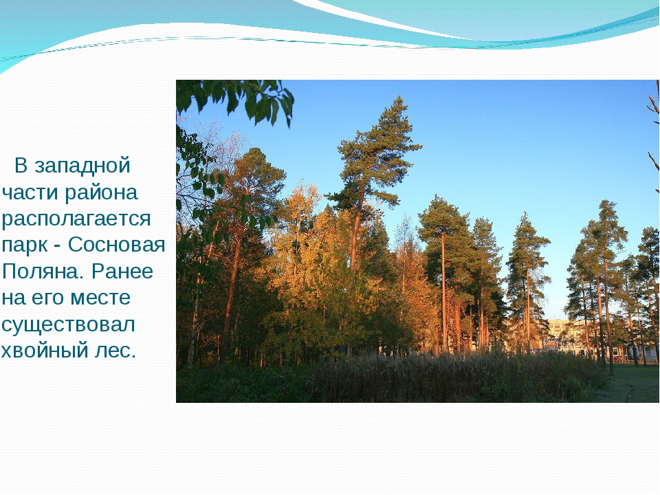 В западной части района располагается парк - Сосновая Поляна. Ранее на его м...