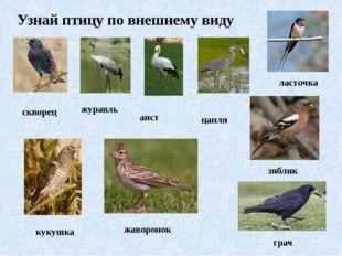 Узнай птицу по внешнему виду скворец журавль аист цапля ласточка кукушка жаво