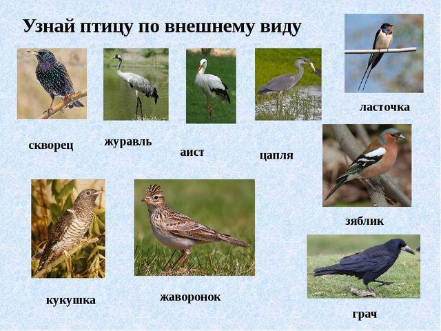 Узнай птицу по внешнему виду скворец журавль аист цапля ласточка кукушка жаво...