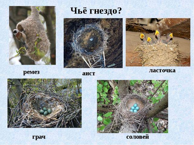 Чьё гнездо? ремез аист ласточка грач соловей