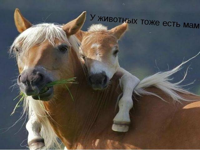 У животных тоже есть мама!