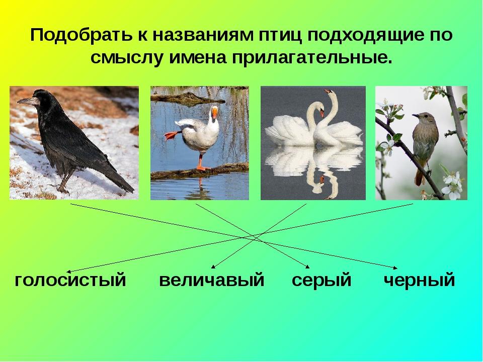 Подобрать к названиям птиц подходящие по смыслу имена прилагательные. голосис...