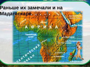 Раньше их замечали и на Мадагаскаре.