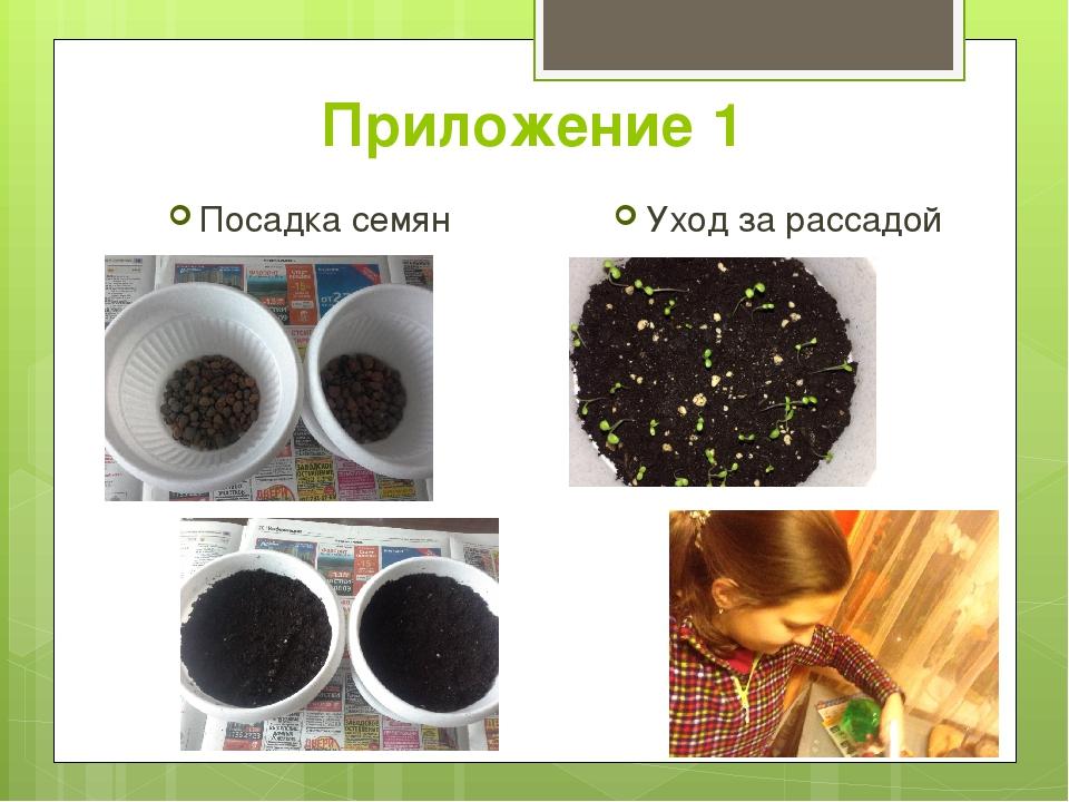 Приложение 1 Посадка семян Уход за рассадой