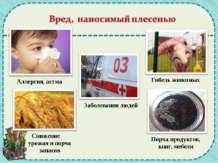 Аллергия, астма Гибель животных Заболевания людей Снижение урожая и порча зап