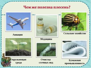 Авиация Медицина Сельское хозяйство Окружающая среда Очистка сточных вод Бума
