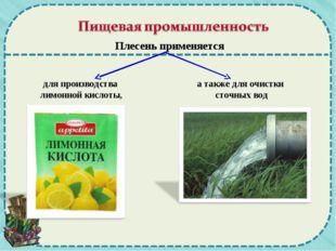 для производства лимонной кислоты, а также для очистки сточных вод Плесень пр