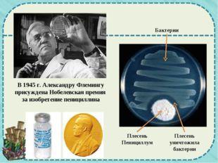 В 1945 г. Александру Флемингу присуждена Нобелевская премия за изобретение пе