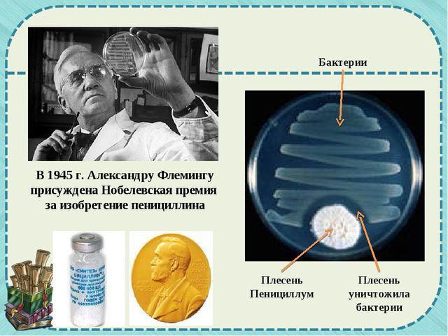 В 1945 г. Александру Флемингу присуждена Нобелевская премия за изобретение пе...
