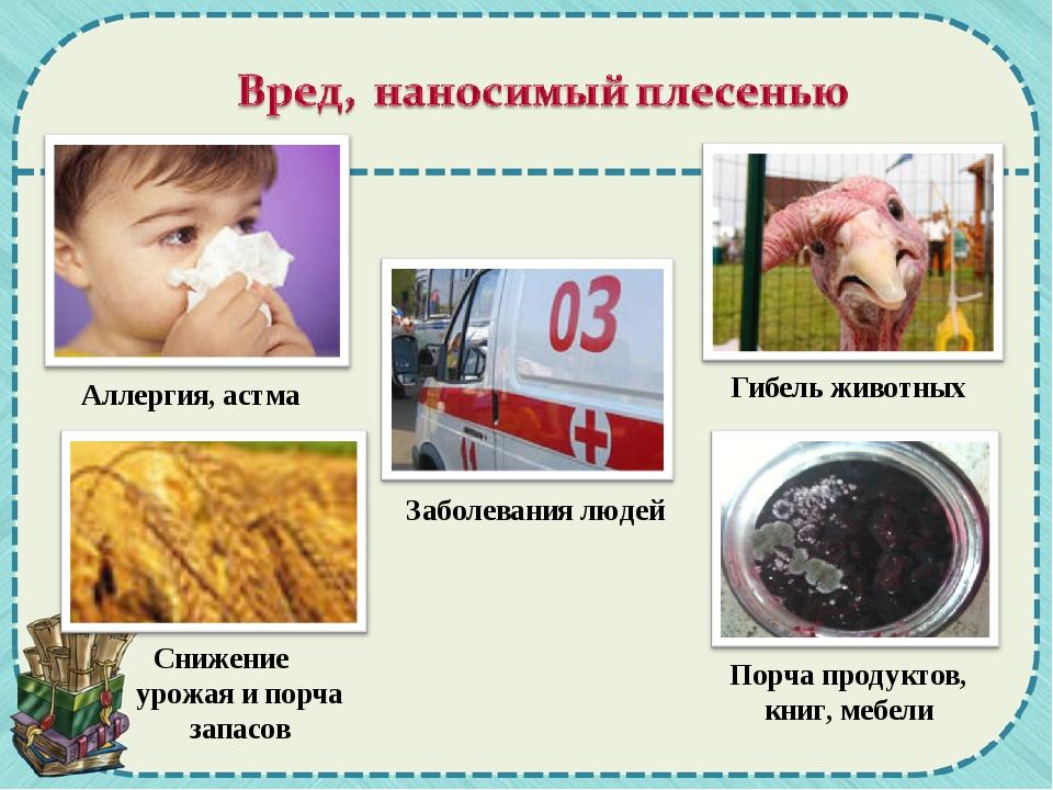 Аллергия, астма Гибель животных Заболевания людей Снижение урожая и порча зап...