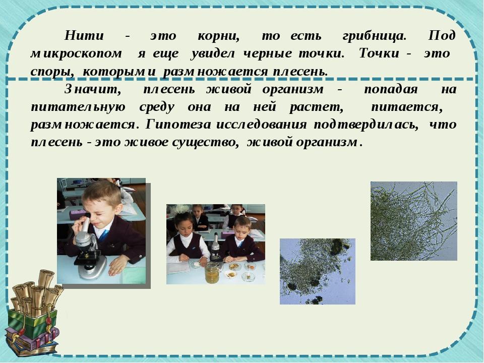 Нити - это корни, то есть грибница. Под микроскопом я еще увидел черные точк...