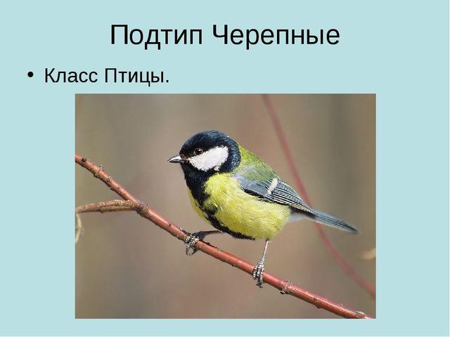 Подтип Черепные Класс Птицы.