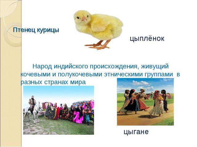 Птенец курицы Народ индийского происхождения, живущий кочевыми и полукочевы...