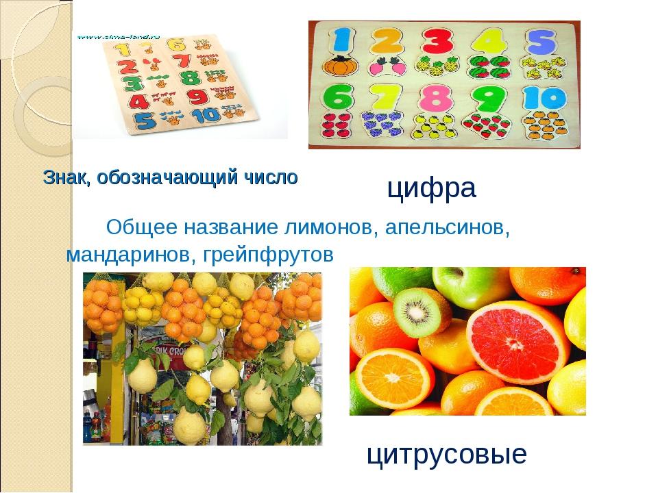 Знак, обозначающий число Общее название лимонов, апельсинов, мандаринов, г...