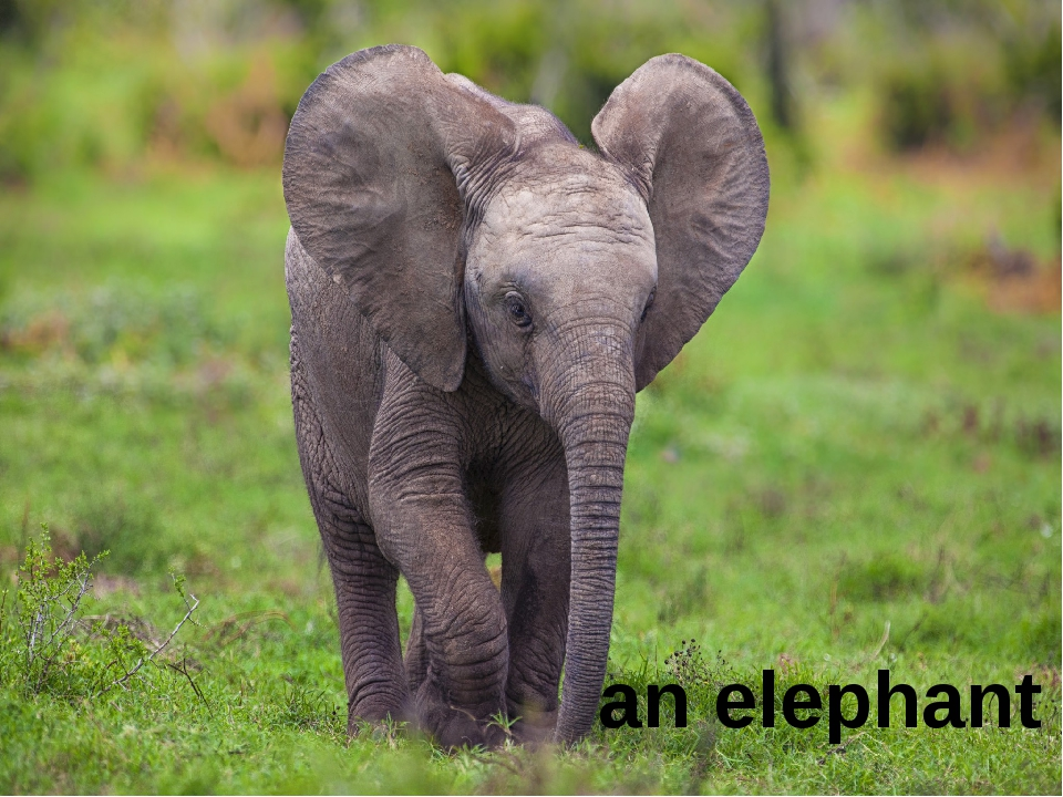 an elephant