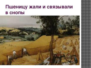 Пшеницу жали и связывали в снопы