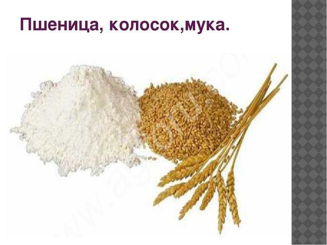 Пшеница, колосок,мука.