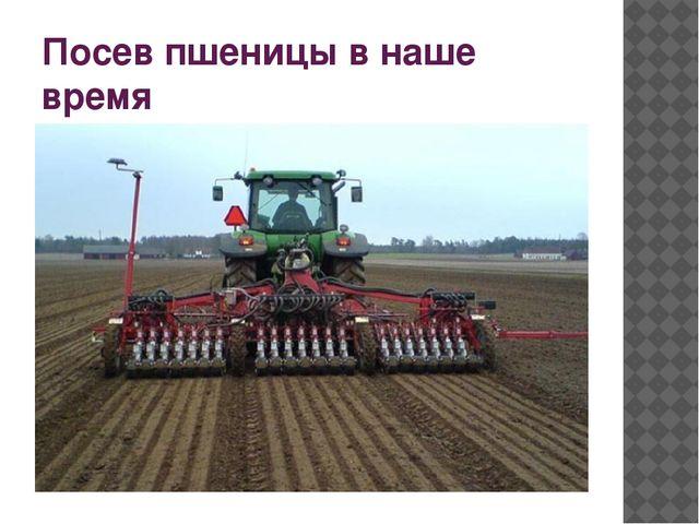 Посев пшеницы в наше время