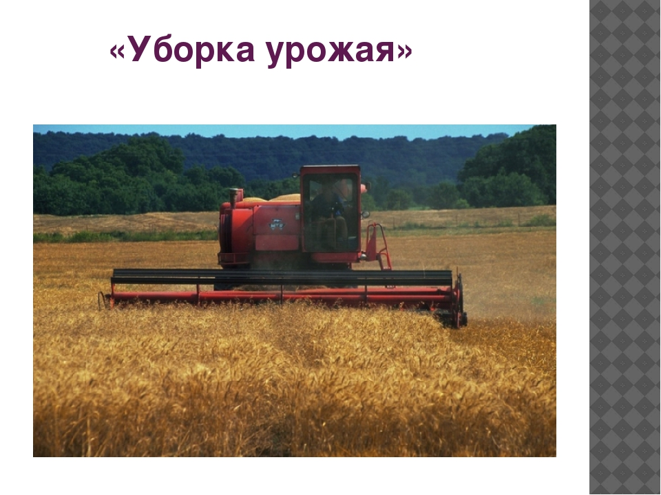 «Уборка урожая»