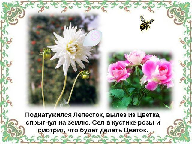 Поднатужился Лепесток, вылез из Цветка, спрыгнул на землю. Сел в кустике розы...