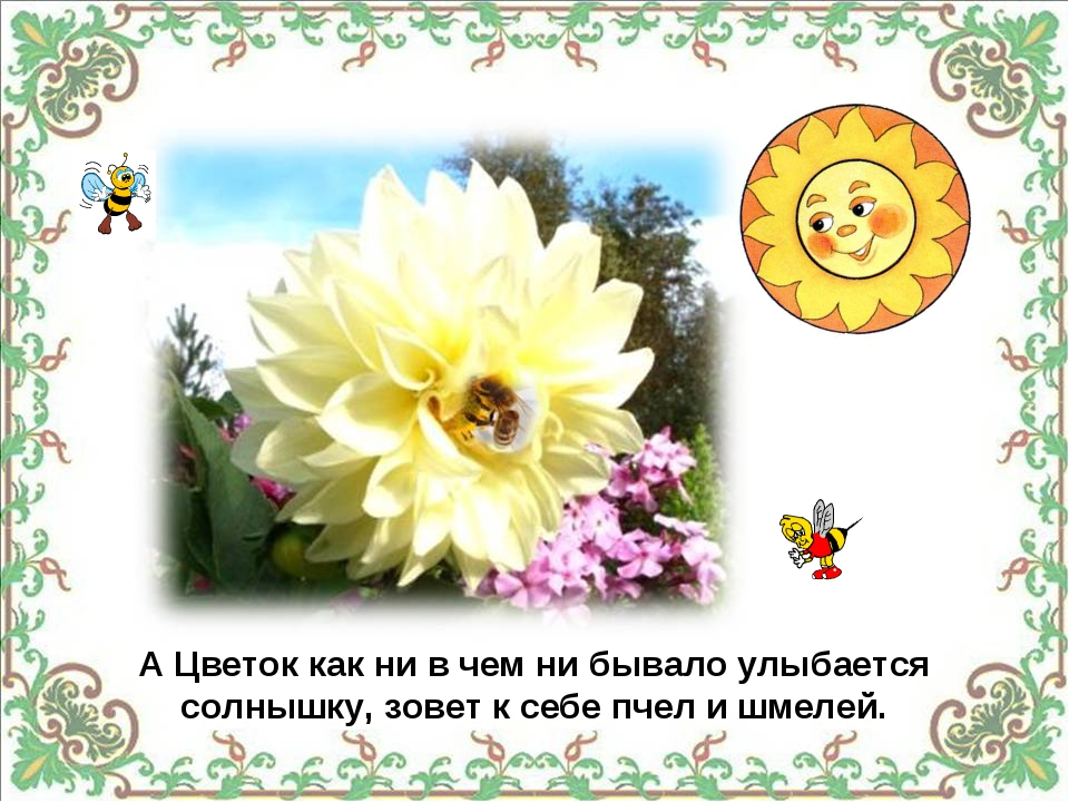 А Цветок как ни в чем ни бывало улыбается солнышку, зовет к себе пчел и шмелей.