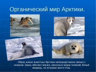 Органический мир Арктики. Образ жизни животных Арктики непосредственно связан