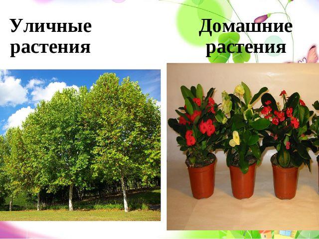 Уличные растения Домашние растения
