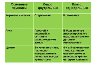 Основные признакиКласс двудольныеКласс однодольные Корневая системаСтержне