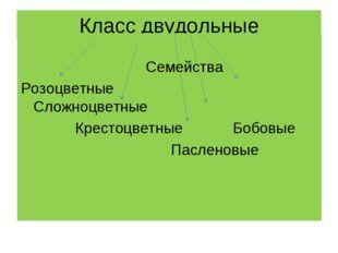 Класс двудольные Семейства Розоцветные Сложноцветные Крестоцветные Бобовые Па