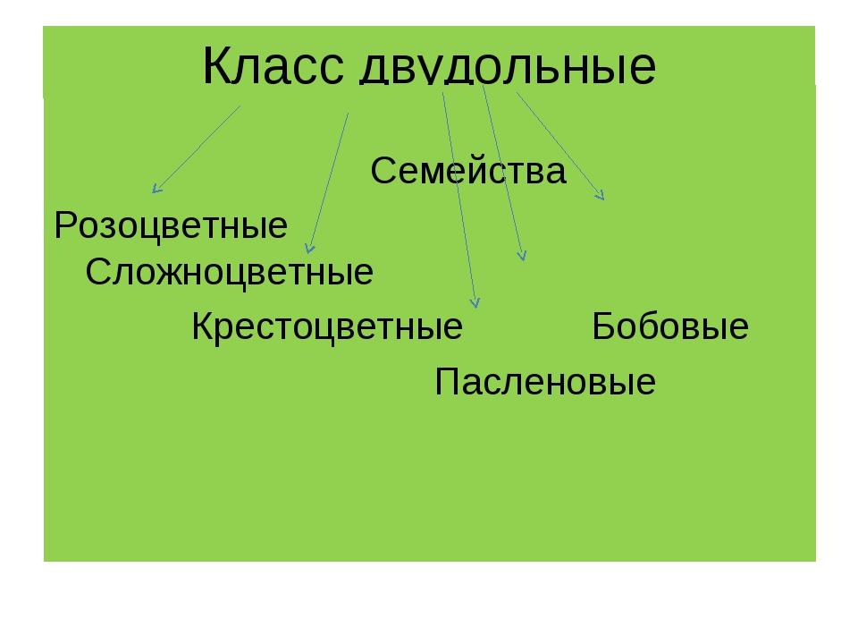 Класс двудольные Семейства Розоцветные Сложноцветные Крестоцветные Бобовые Па...