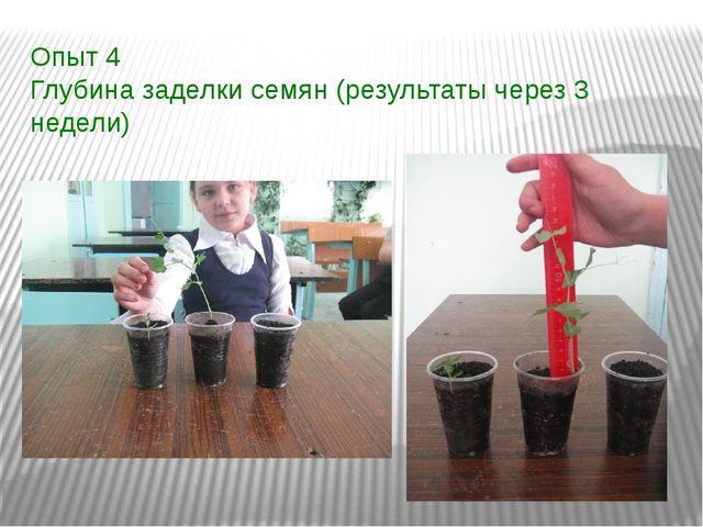 Опыт 4 Глубина заделки семян (результаты через 3 недели)