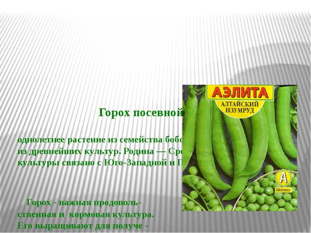 Горох посевной – однолетнее растение из семейства бобовых, одна из древнейши...