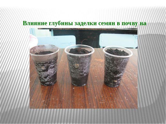 Влияние глубины заделки семян в почву на прорастание семян